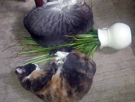 Grow healthy houseplants while keeping pets from harm