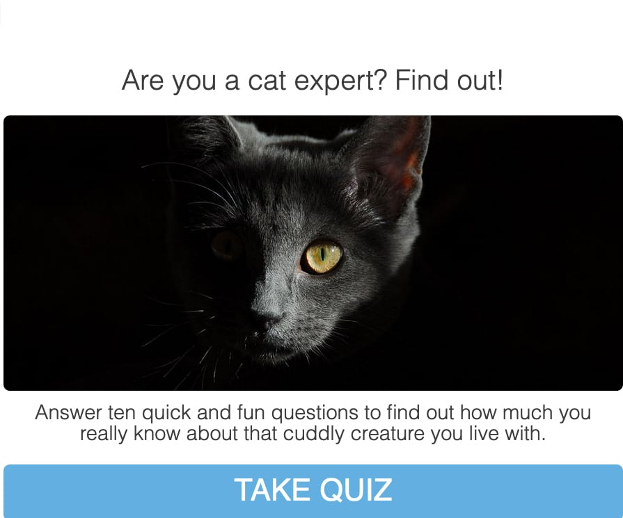 How much do you really know about cats? Even if you have been a cat owner your whole life, our quiz, which covers some little known cat facts, may surprise you!