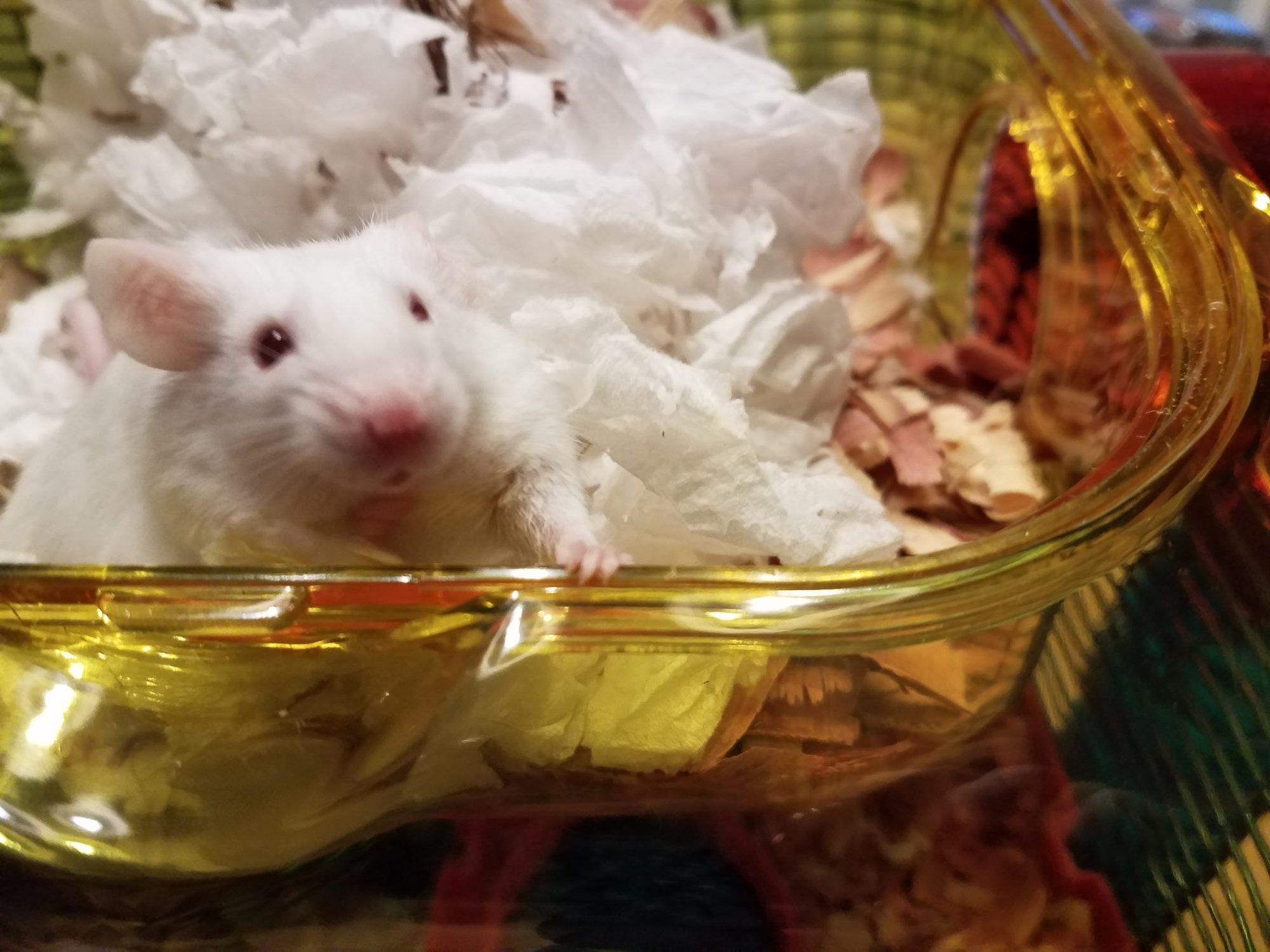 Wow! Classroom pets helps kids learn in many ways, according to a new study