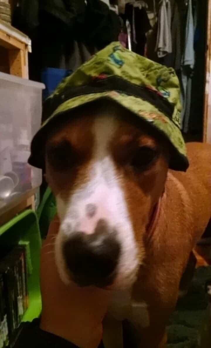 dog wearning a hat