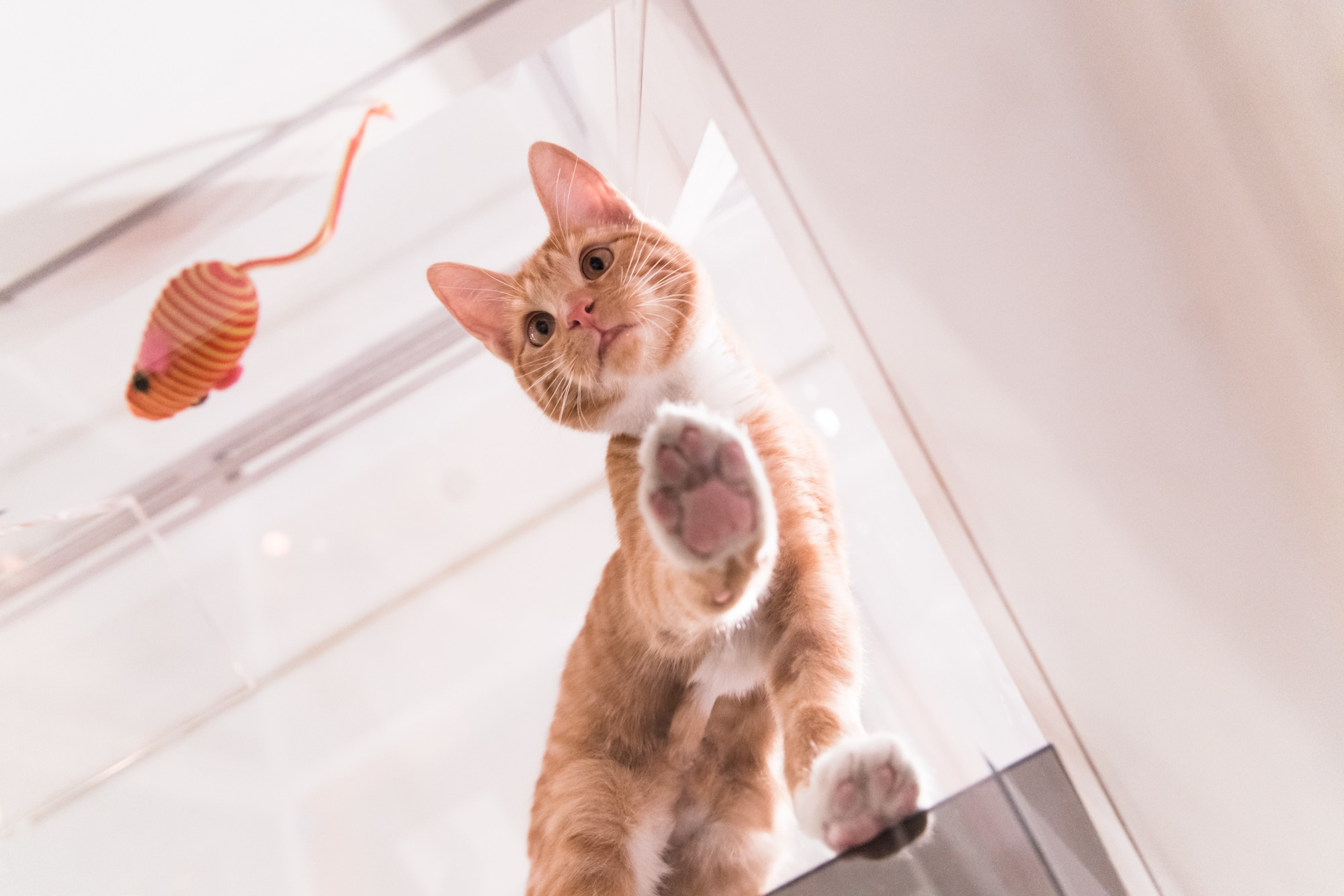 Cat looking down from above atop a glass floor