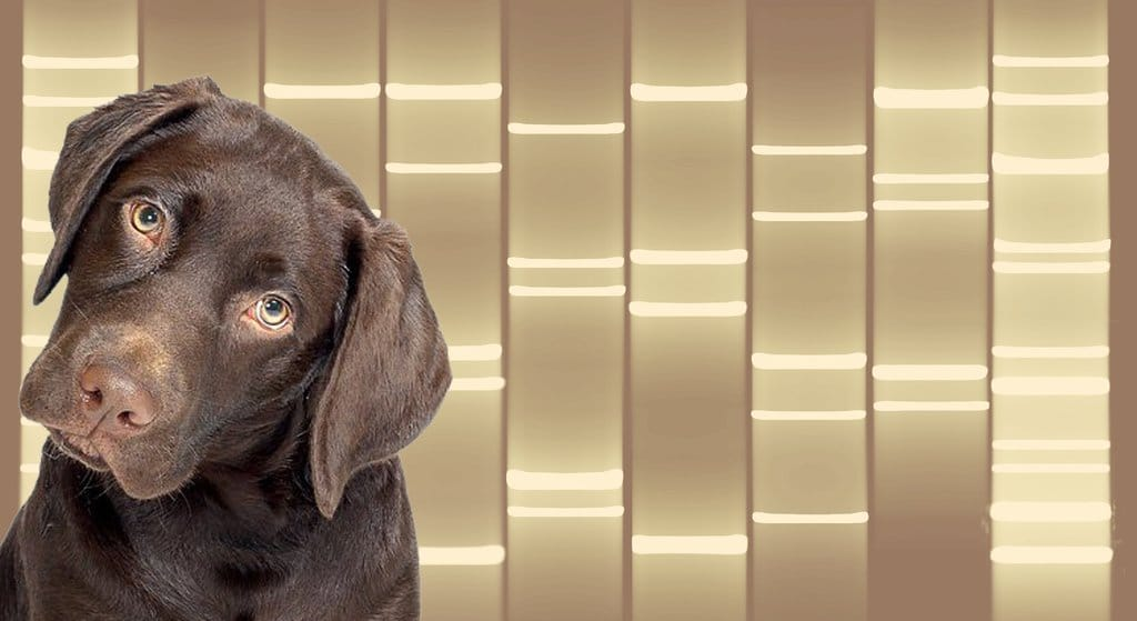 DNA pet portraits
