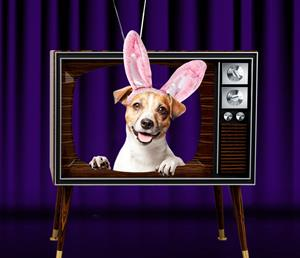 Dog with bunny ears on TV