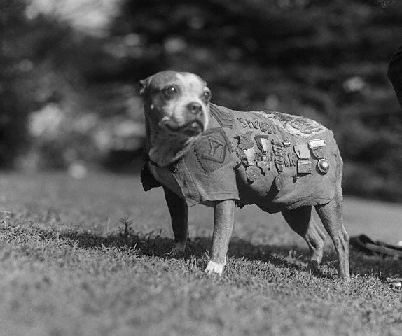 Sergeant Stubby statue coming to American Kennel Club Museum of the Dog