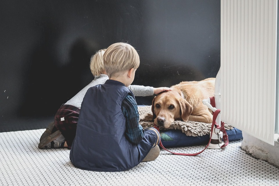 Museum in Santa Monica shows kids how to take better care of pets