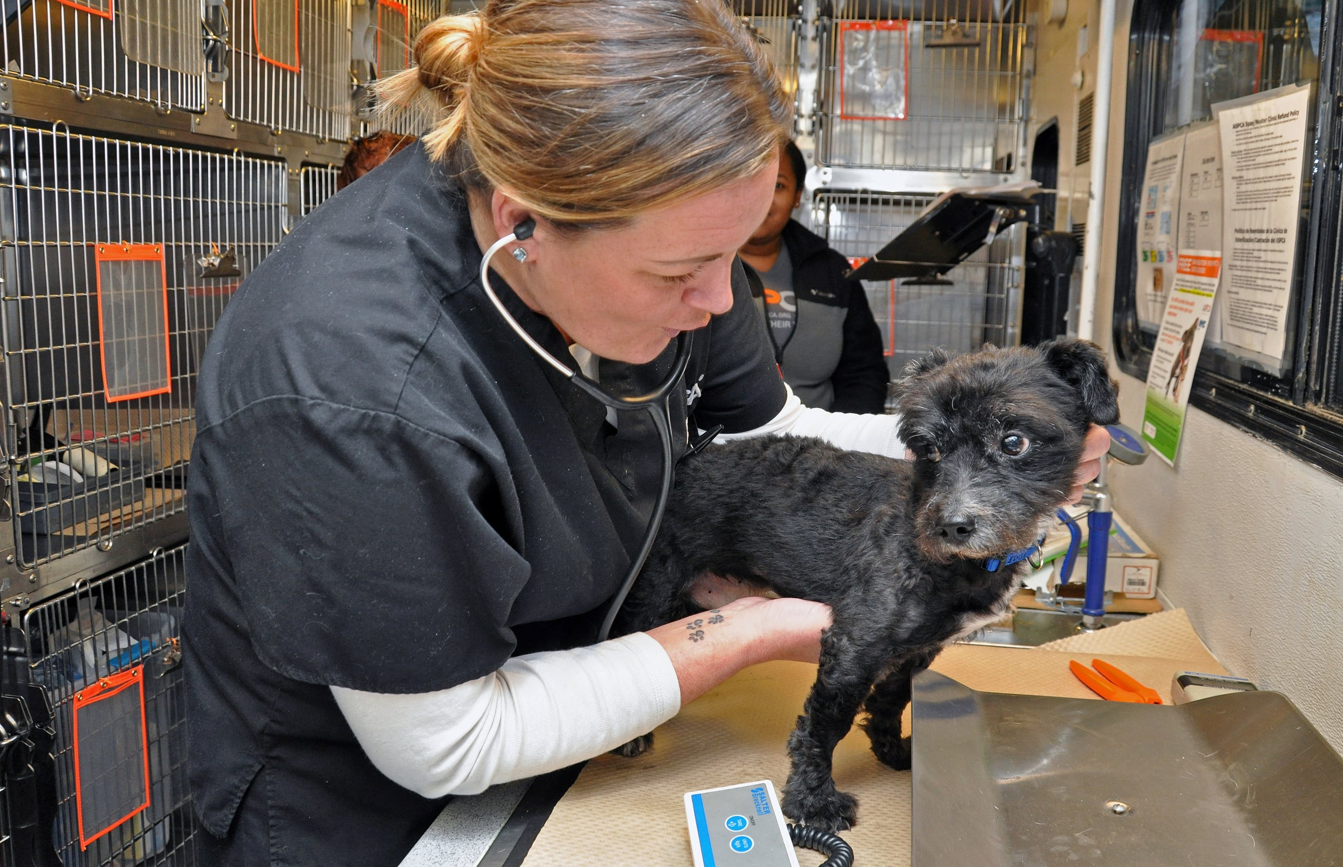 ASPCA announces $45 million commitment to help animal cruelty victims and low-income pet owners