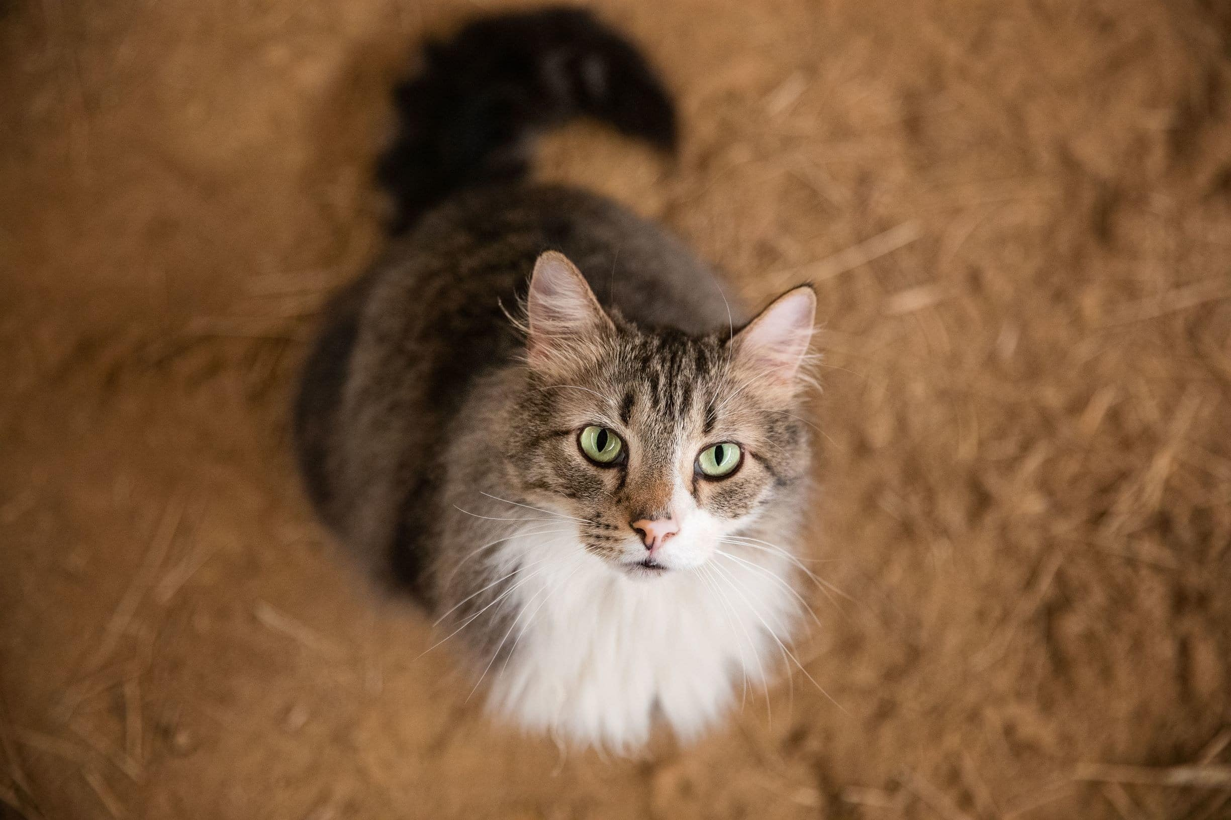 Adopt-a-Cat Month means a time to find shelter cats home and celebrate our furry feline friends