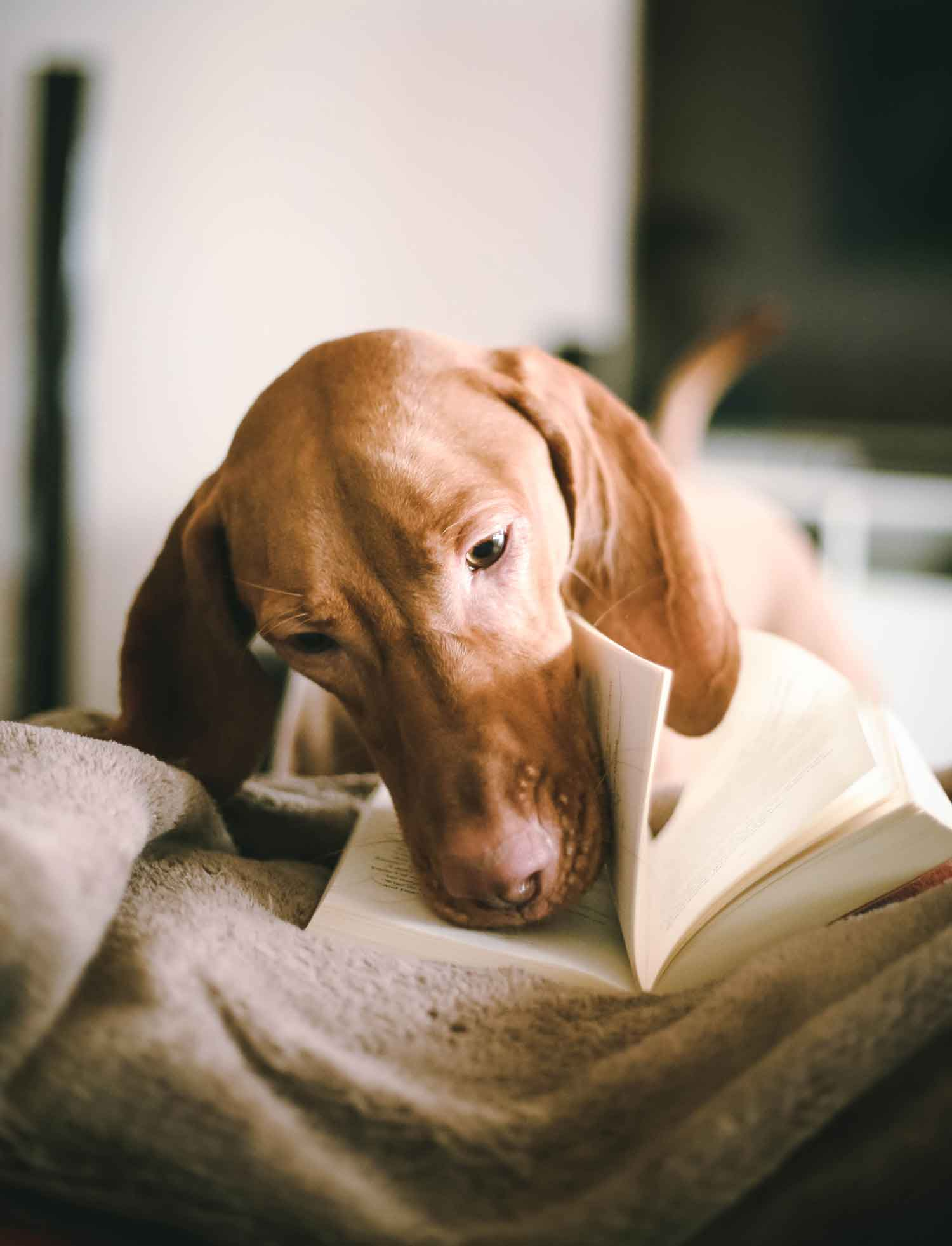 Books for dogs