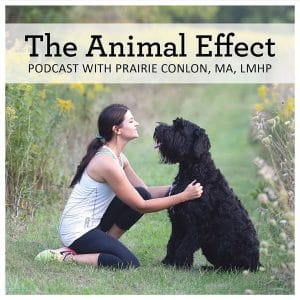 Podcast looks at stories of healing through animal assisted interventions and therapy