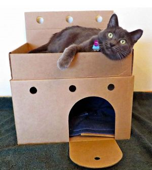Castles for shelter cats