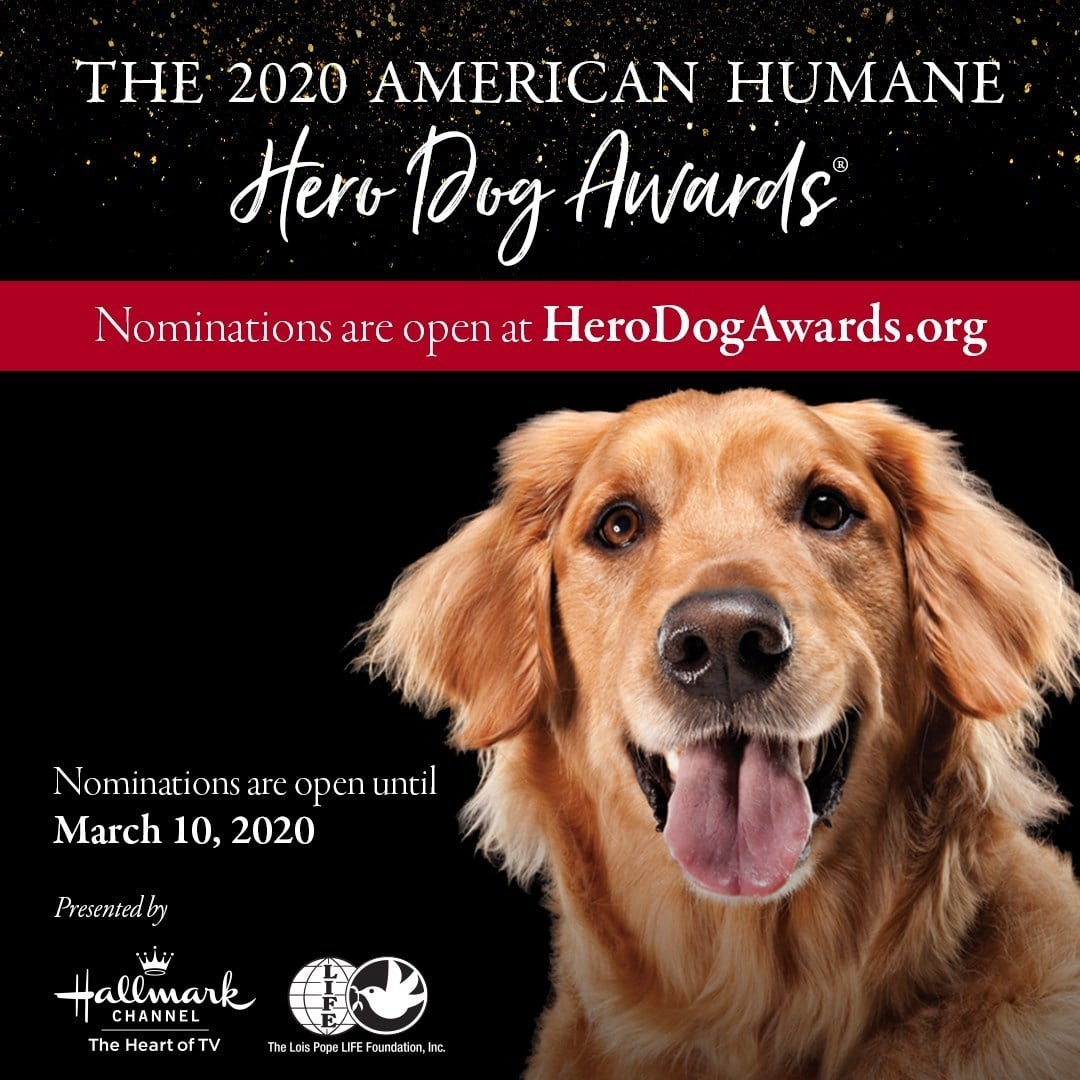 Dog owners are invited to nominate heroic hounds for American Humane Hero Dog Awards