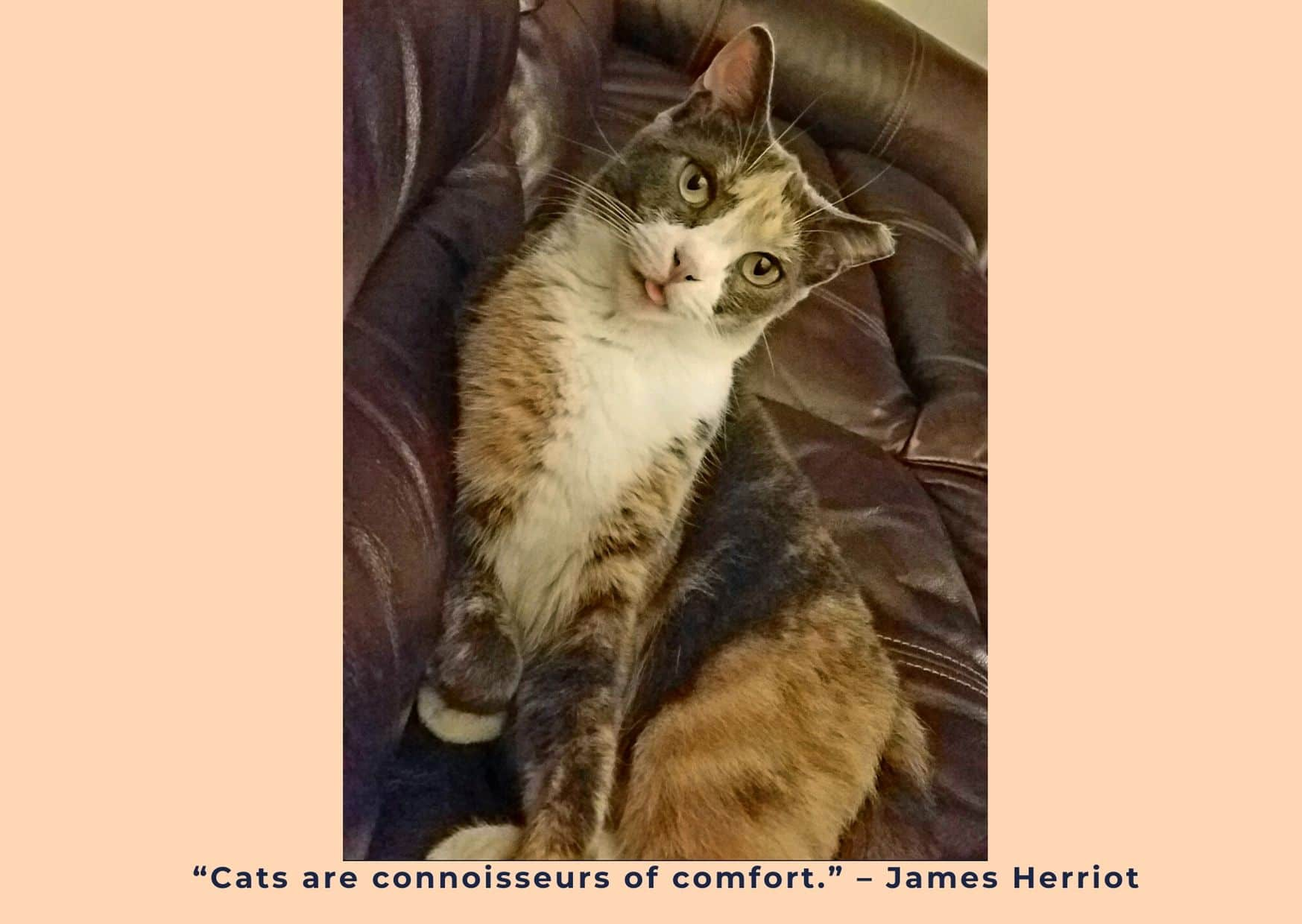 Eight great cat quotes