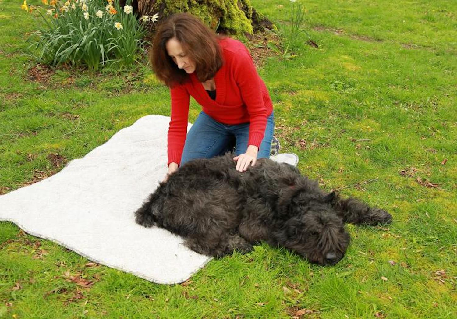 In person an online pet massage classes available