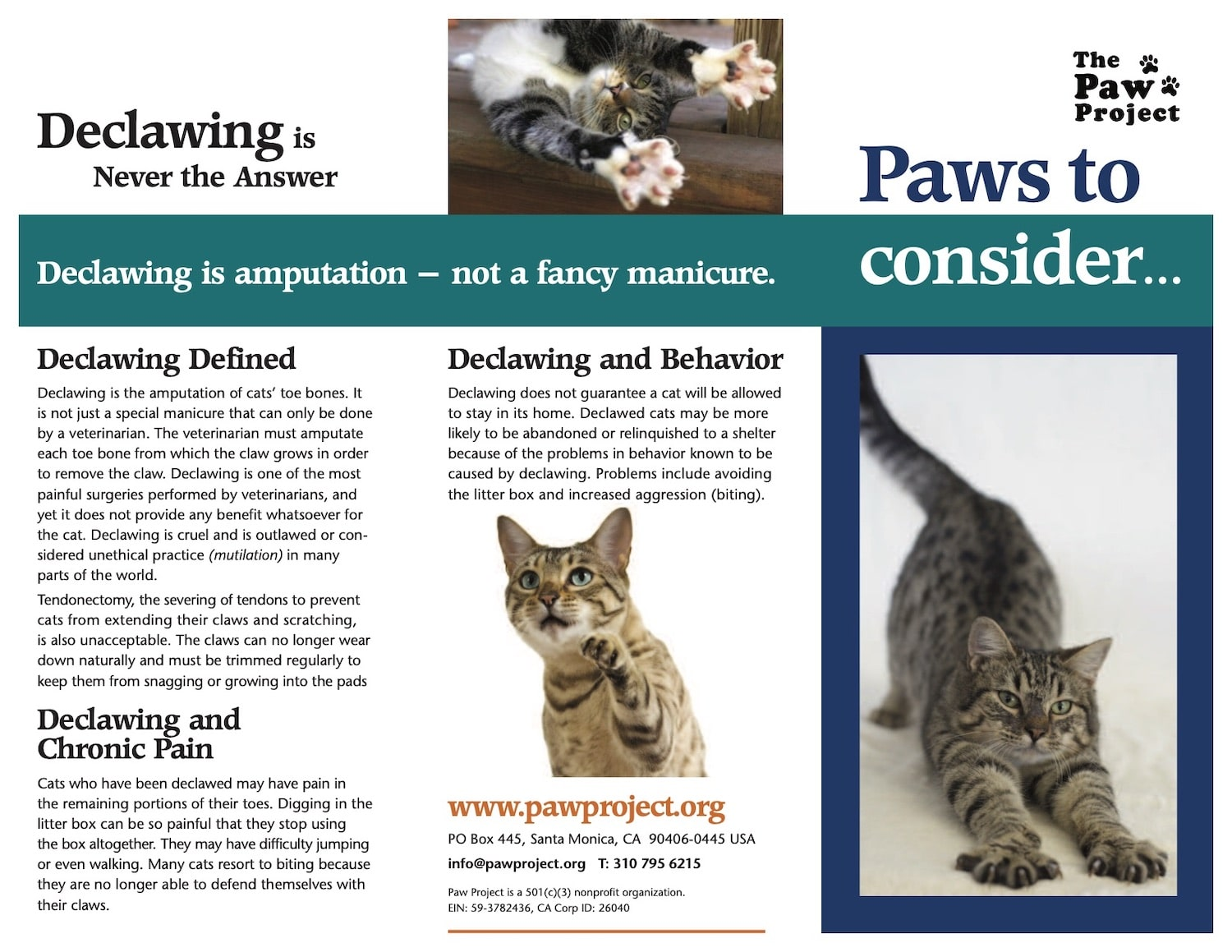 The Paw Project applauds U.S. and Canada VCA Animal Hospitals decision to end declawing of cats