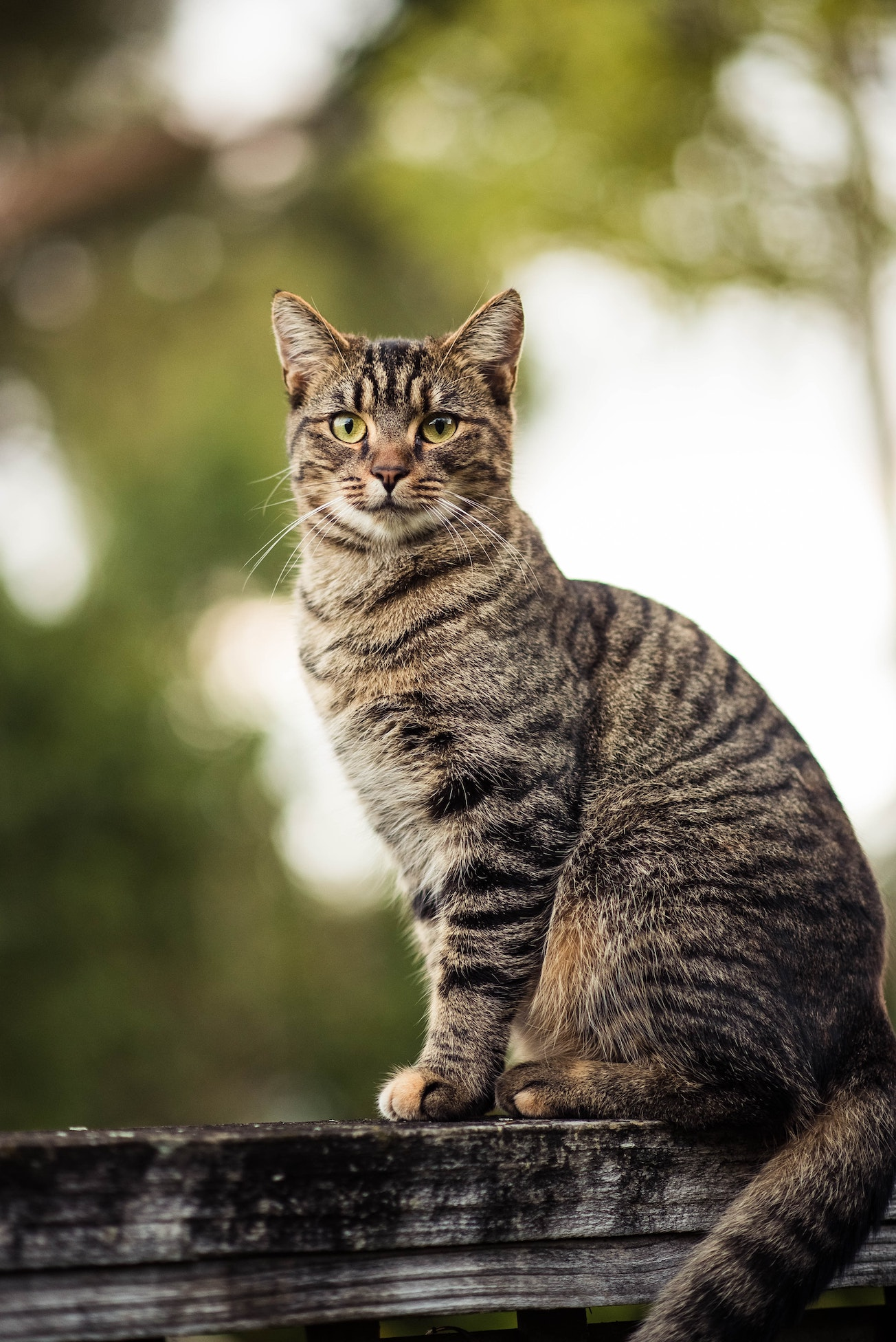 Alley Cat Allies states caregivers can continue to feed feral cat colonies during shelter in place restrictions
