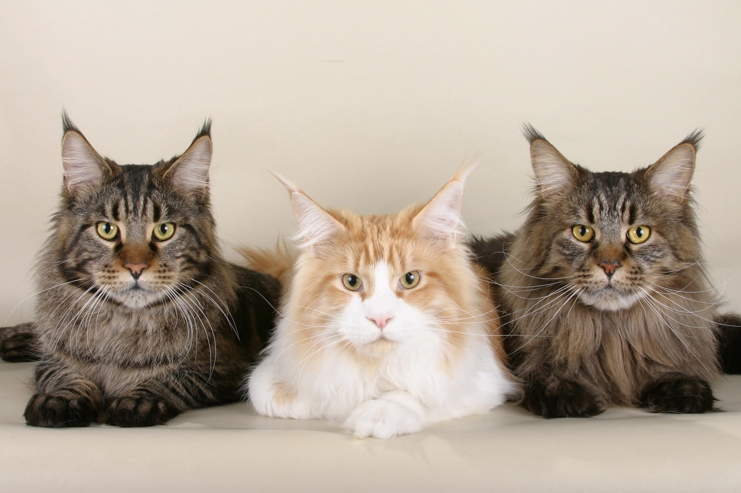 Coronavirus and your pet: CDC states there is no evidence that pets are a source of infection