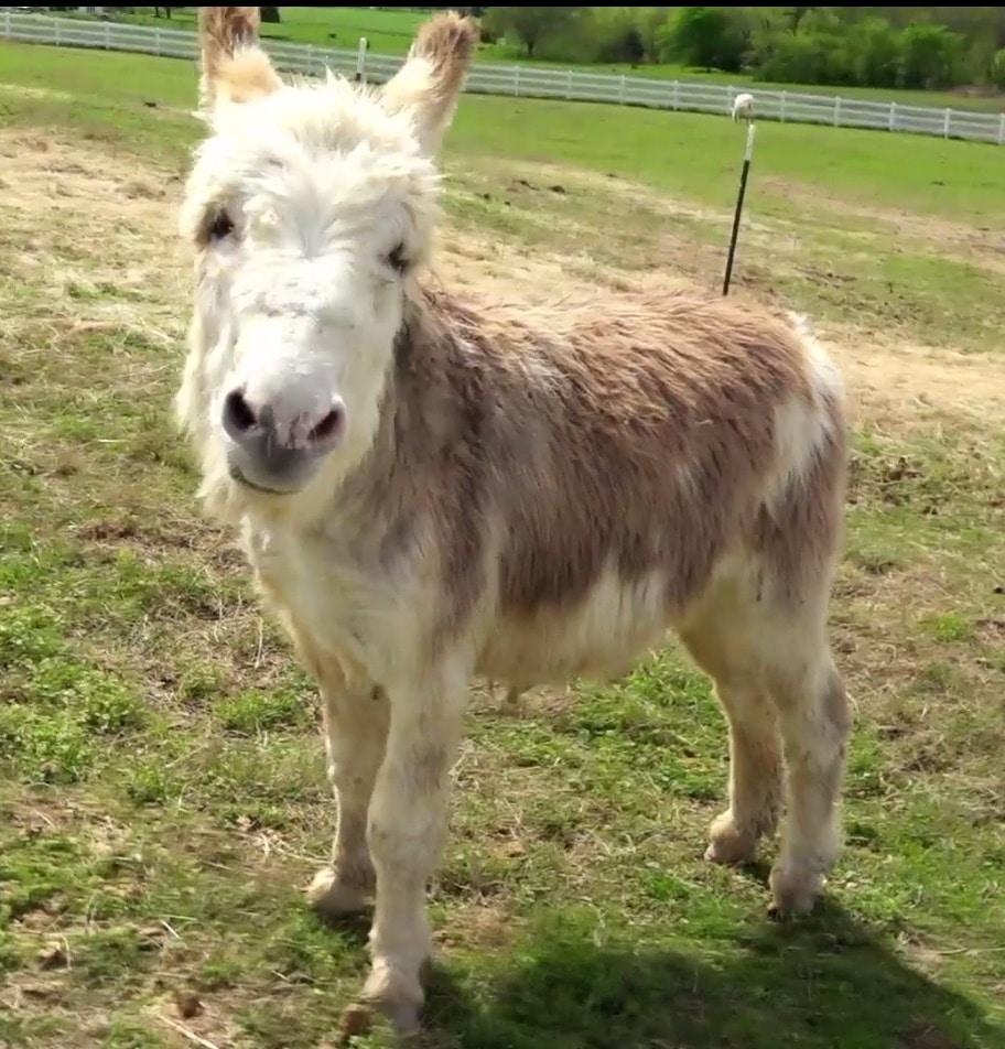 Virtually pet a goat or get chased by a donkey thanks to animal sanctuary ranch cams